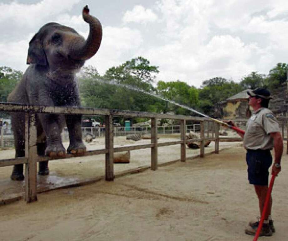 Zookeeper Mike Huff sprays water on Lucky, the San Antonio Zoo's only elephant. A complaint filed with the USDA says the animal is being mistreated, but zoo officials say she is healthy and content.