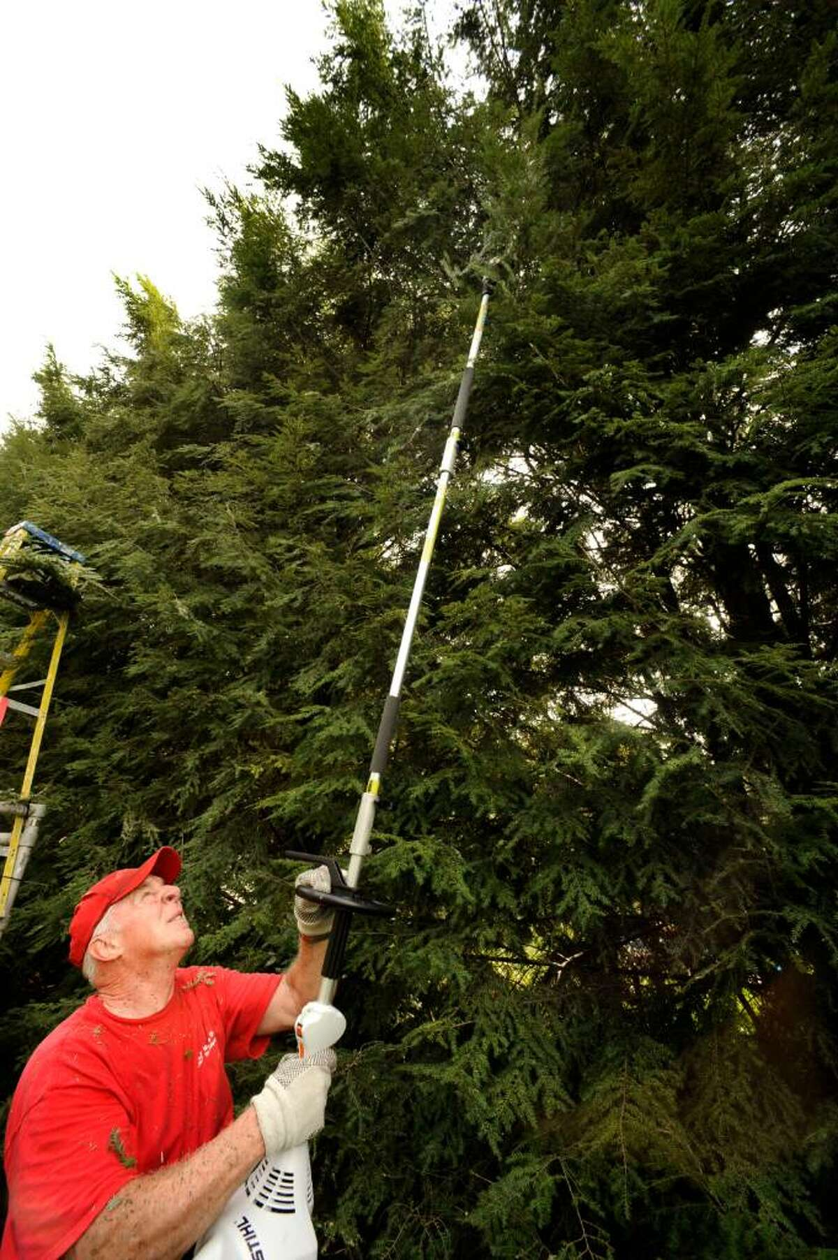 Peter Brady of Brookfield, known as the Handy Dandy Handyman, works trimming a hedge in Brookfield on Monday, Sept. 8, 2009.