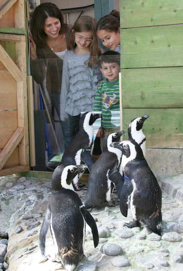 Meredith Trotta; and her kids, Lilly, Grace and George Parzych, all of Ridgefield, take a behind-the-scenes look at the Maritime Aquarium at Norwalk's African penguin colony during the All Access Penguin tour. Photo: Contributed Photo / Connecticut Post Contributed