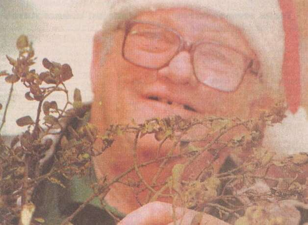 """Lowell Broxson displays some mistletoe affected by the drought."" File photo Dec. 22, 1999"