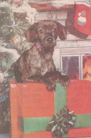 """Aspen poses in a photo for Carol Carpenter's Christmas cards."" File photo Dec. 20, 1998"