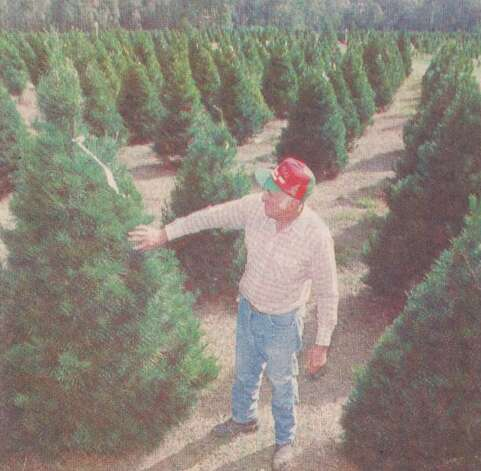 """Verley G. Spell, owner of Spell's Golden Triangle Trees in Orange, checks one of the pre-tagged trees on his farm. The tags indicate the trees have already been sold. He uses special machinery to trim the trees, but relies on what ever rain falls to watering the trees."" File photo Nov. 24, 1996"
