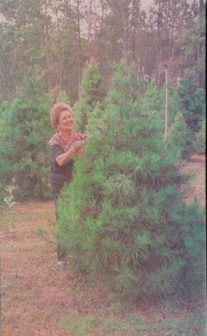 """Tree farm owner Dorothy Brown puts price tags on this season's crop."" File photo Oct. 26, 1994"