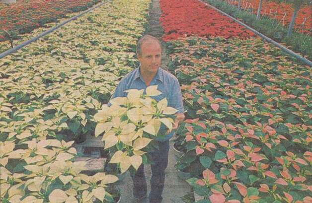 """Don Jenkins, above, and some of the many varieties of poinsettias he raises."" File photo Nov. 28, 1994"