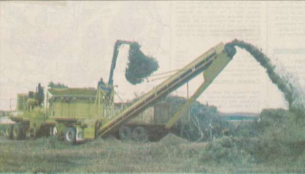 """Ulysses Cormier of the City of Beaumont Solid Waste Department deposits discarded Christmas trees into a chipper at the city landfill Wednesday."" File photo Dec. 30, 1993"