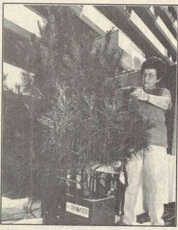 """Lillian McCanse, of Oregon, Ill., demonstrates the Lit'l Shakee which her husband Ed designed. The machine shakes free loose needles and other debris from freshly cut trees."" McCanse was at the Texas Christmas Tree Growers Association annual convention at the Holiday Inn Beaumont Plaza. File photo Sept. 26, 1992"