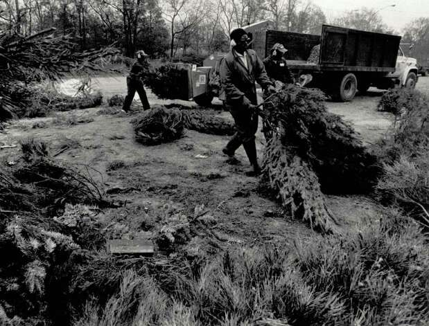 """Beaumont Parks and Recreation Dept. employees feed the community's Christmas trees into a chipper at Rogers Park. The chipper converts the trees into a decorative mulch that will be used throughout the city for landscaping and ornamental plantings."" File photo January 2, 1991"