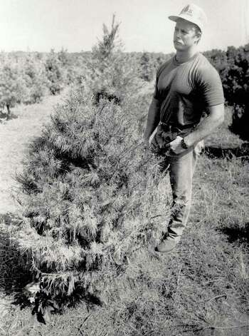 """Wade Kachtik looks over some of his Christmas trees that died this summer due to the flooding in Orange County."" File photo Sept. 12, 1989"