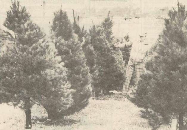 """Frank Praznik examines trees at the West En Optimist Club's Christmas tree lot, corner of Lucas and the Eastex."" FIle photo Dec. 21, 1987"
