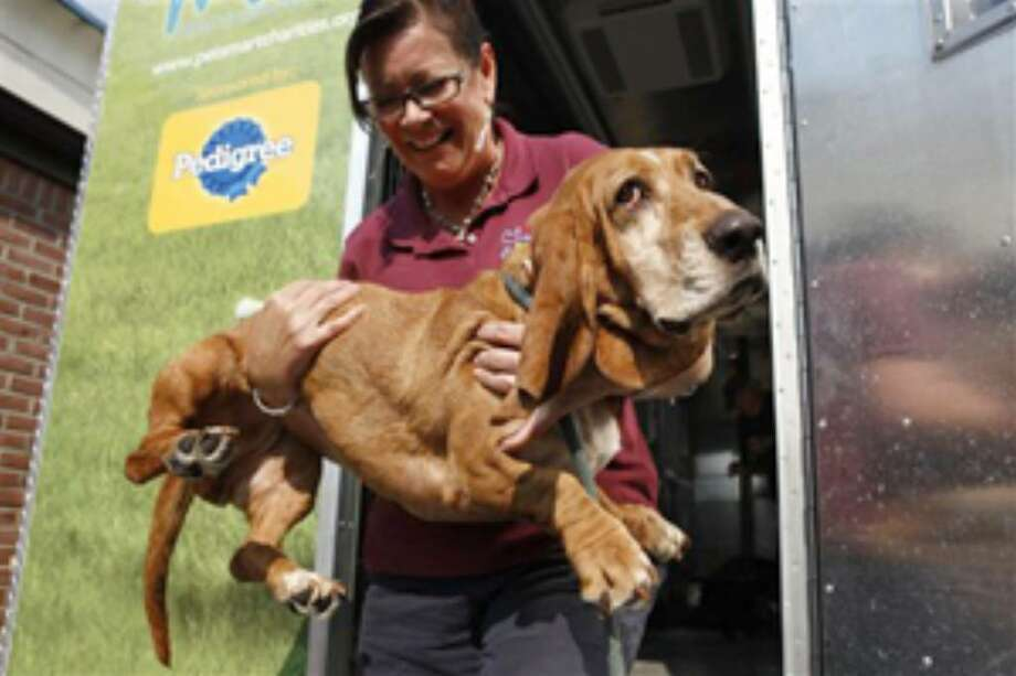 "Jodie Martin unloads a dog from an Ohio shelter from the ""Rescue Waggin',"" a transportation service that takes animals from crowded shelters to uncrowded ones, at the Washington Animal Rescue League in Washington."