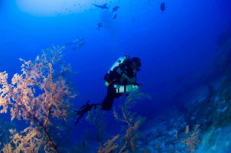 Randall Kosaki, chief scientist and diver on NOAA's recent research mission to the Northwestern Hawaiian Islands, is seen among deep coral reefs at Pearl and Hermes Atoll.