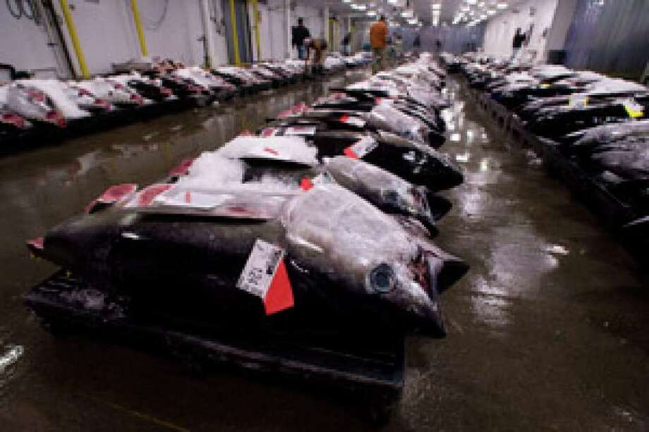 Bigeye tuna line the floor of the United Fishing Agency's auction house in Honolulu. On New Year's Eve each year, thousands line up at fish counters across Hawaii to buy blocks of raw tuna, hoping that eating it will bring good luck and prosperity in the new year.
