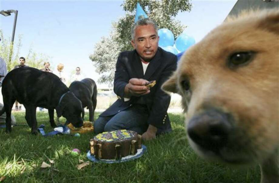 "Cesar Millan celebrates his 40th birthday Sept. 8 at the East Valley Animal Shelter in the Van Nuys section of Los Angeles. ""Cesar's Way"" will be published twice this year and six times next year."