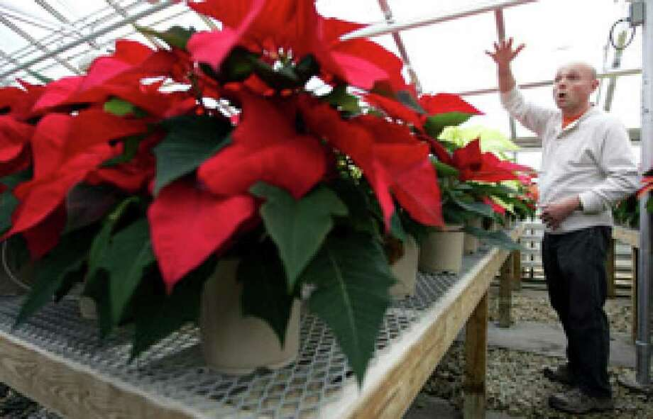 University of New Hampshire assistant manager of the greenhouses Dave Goudreault talks about the many different varieties of poinsettias grown at the university in Durham, N.H.