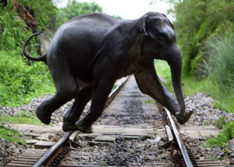 A wild elephant crossing a railway track along Deepor Beel, a wild life sanctuary on the outskirts of Gauhati, India.