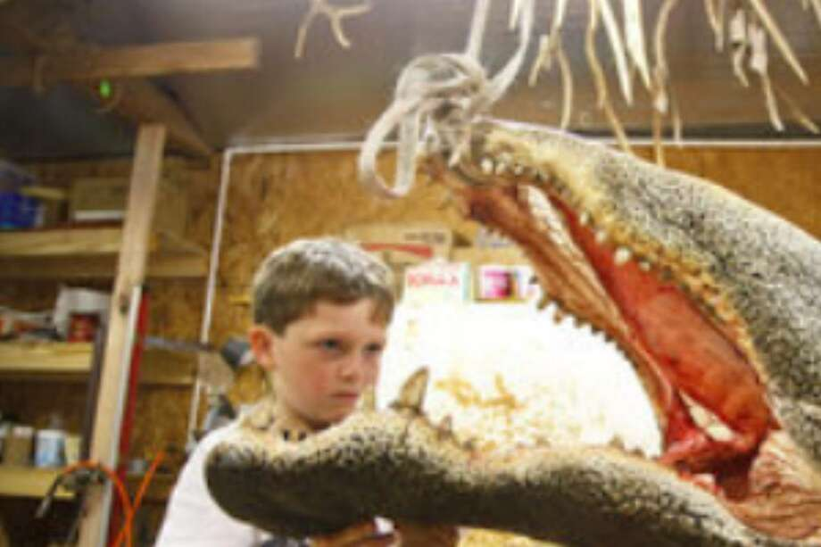 "Simon examines the alligator's head, which weighs 104 pounds. ""I was never afraid for a second,"" he said."