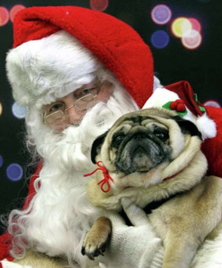 Santa holds a pug at the PetSmart in Robinson Township, Pa.