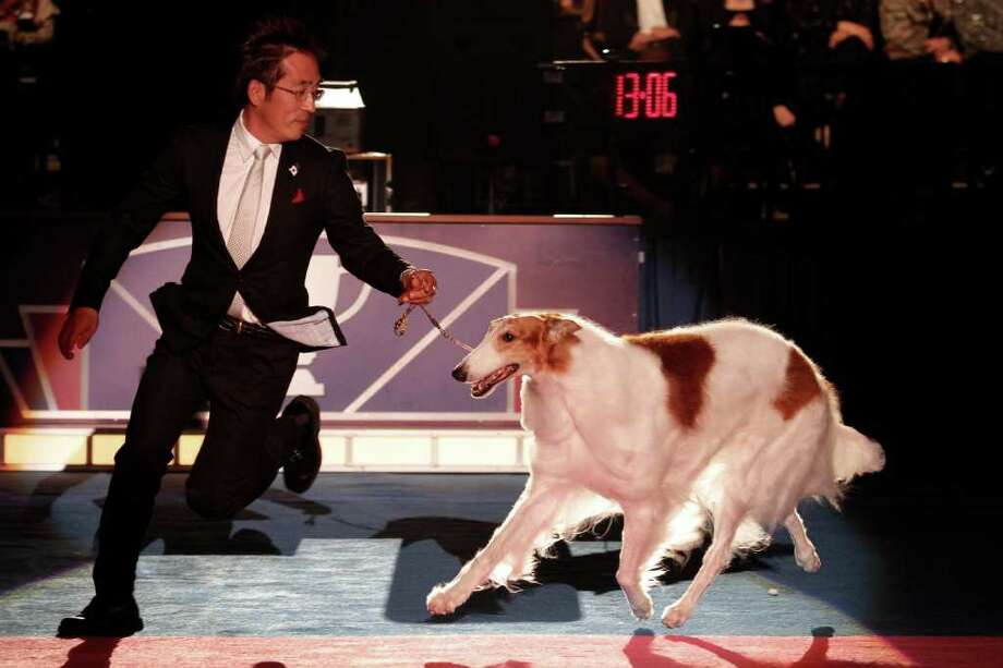 From Japan, Sunburst Huntsman At Mechta, a Borzoi, finishes as runner-up  during Eukanuba World Challenge at the Tenth Annual AKC Eukanuba National Championship dog show on Sunday Dec. 5,2010 in Long Beach, Calif. (AP Photo/Richard Vogel) Photo: Richard Vogel