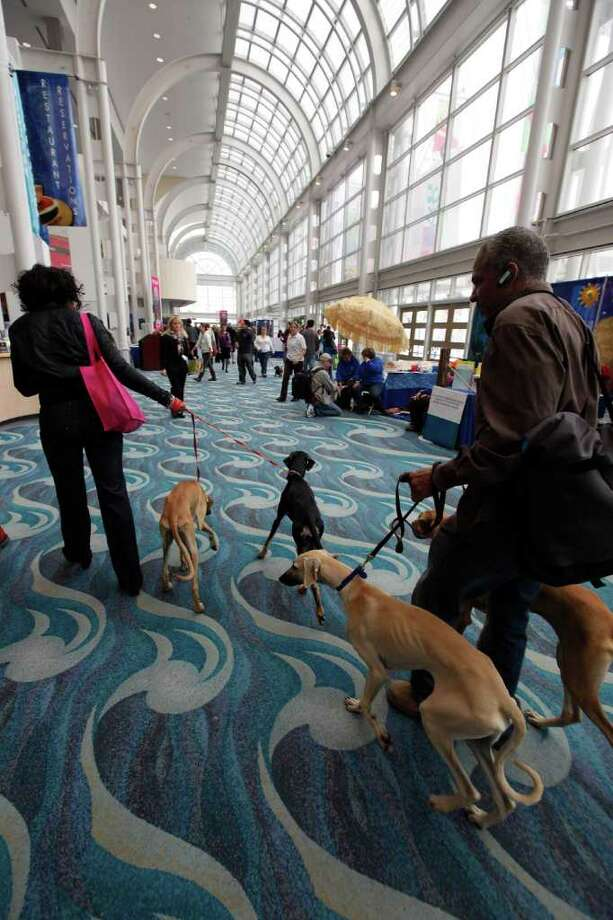 African sight hounds, Sloughi, walk through the exhibitor's hall at the Long Beach Convention Center at the Tenth Annual AKC/Eukanuba National Championship dog show on Sunday Dec. 5, 2010, in Long Beach, Calif.  (AP Photo/Richard Vogel) Photo: Richard Vogel