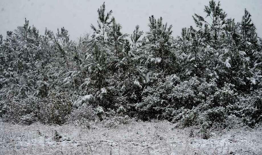 Snow falls on a pine forest in Kountze, Thursday. Tammy McKinley/ The Enterprise Photo: TAMMY MCKINLEY / Beaumont