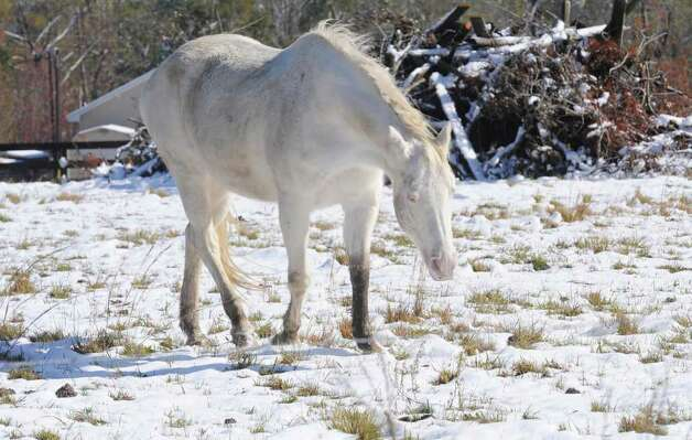 In Kountze, a horse prances through the snow covered grass on Thursday morning. December 11, 2008. Valentino Mauricio/The Enterprise Photo: Valentino Mauricio / Beaumont
