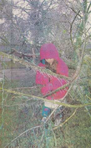 """Emily Gilman, 7, is playing with icicles from the tree in her front yard."" ""A deep cold and a little rain blanketed the Golden Triangle in icicles Sunday, causing schools to close and thousands to lose power after ice-laden trees fell on powerlines."" File photo Jan. 13, 1997"