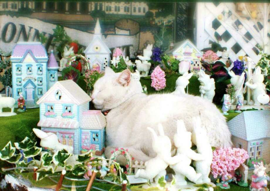 Minnie the Moocher, the cat in residence at Clough's Hardware and Paint in Stratford, died last month at 18 years of age. The all-white cat was a fixture of the store and somewhat of a local celebrity with a sizeable following of adoring adults and children. Photo: Contributed Photo / Connecticut Post Contributed