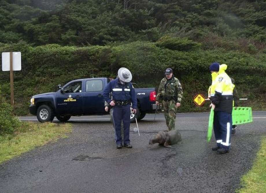 This photo provided by Oregon State Police, Oregon State Police Patrol and Fish & Wildlife Division troopers assisted by Yachats Fire and Rescue personnel help a sea lion stranded south of Yachats, Ore. return to the ocean on Saturday. Photo: Oregon State Police/Associated Press