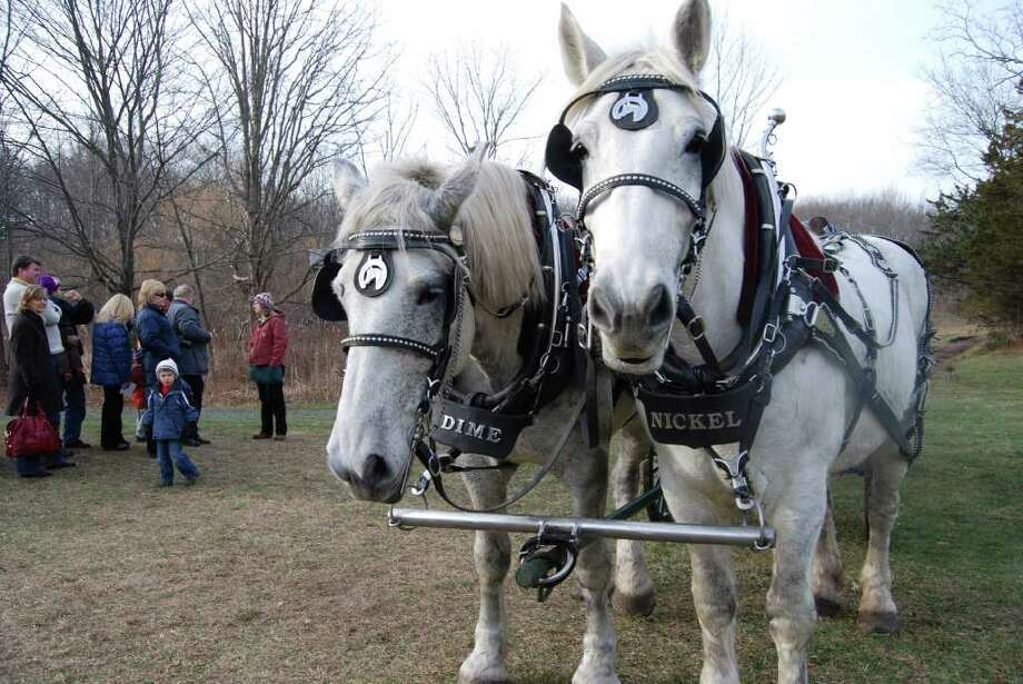 """""""Nickel"""" and """"Dime"""" are ready to pull the sleigh at the New Canaan Nature Center Winter Wonderland. Photo: Jeanna Petersen Shepard / New Canaan News"""