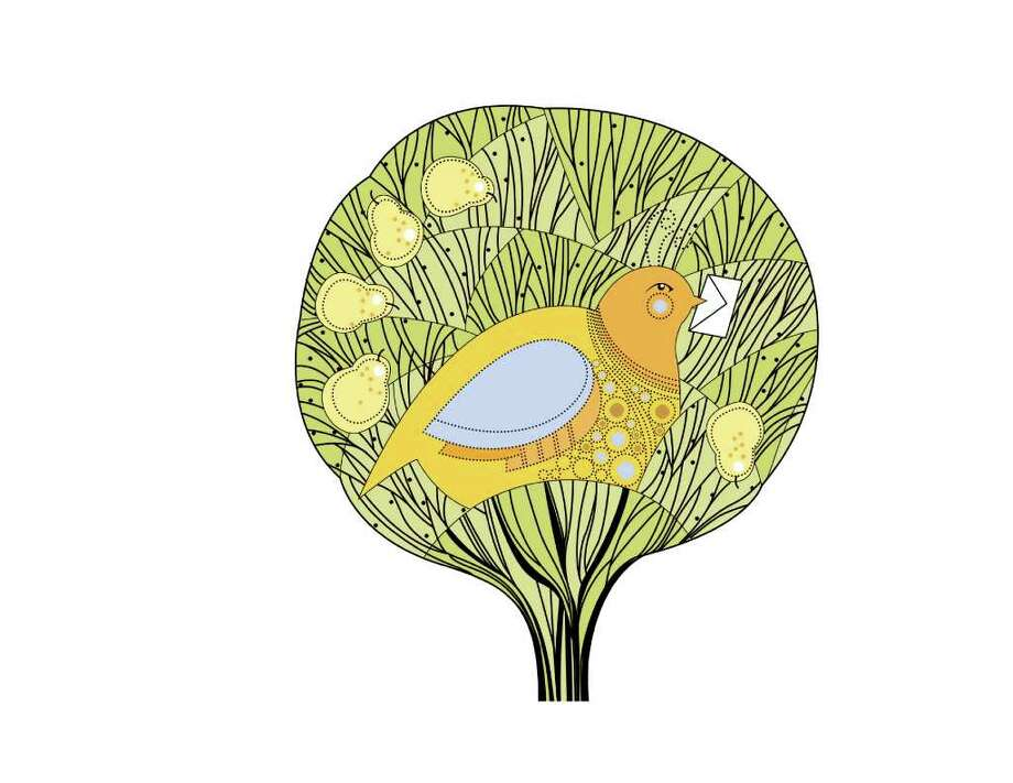 partridge in a pear tree for STAR Photo: Susan Barber / DirectToArchive