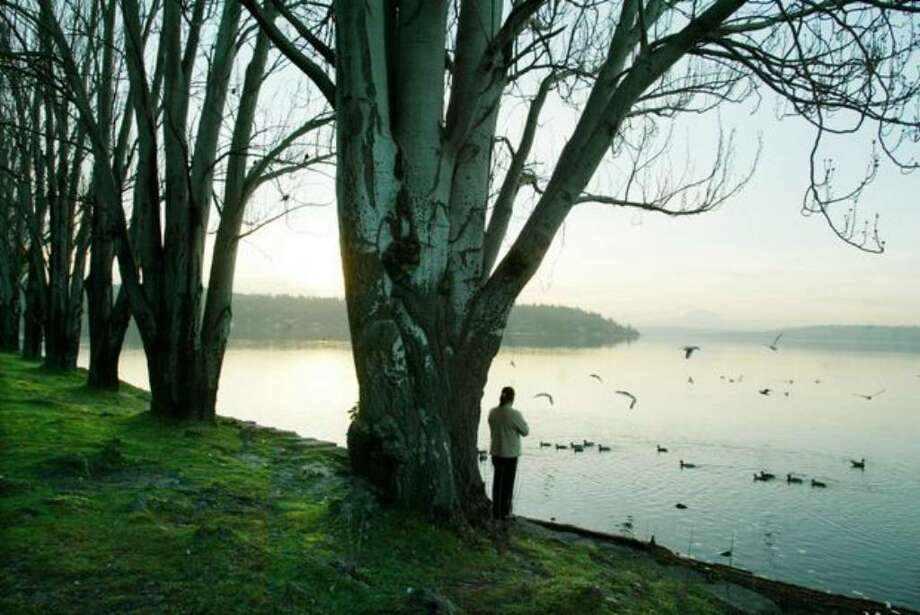 An early morning visitor looks over the waters of Lake Washington from Seward Park in this 2005 file photo. Police searched this area for Nicole Cearo, without success. Photo: / P-I File