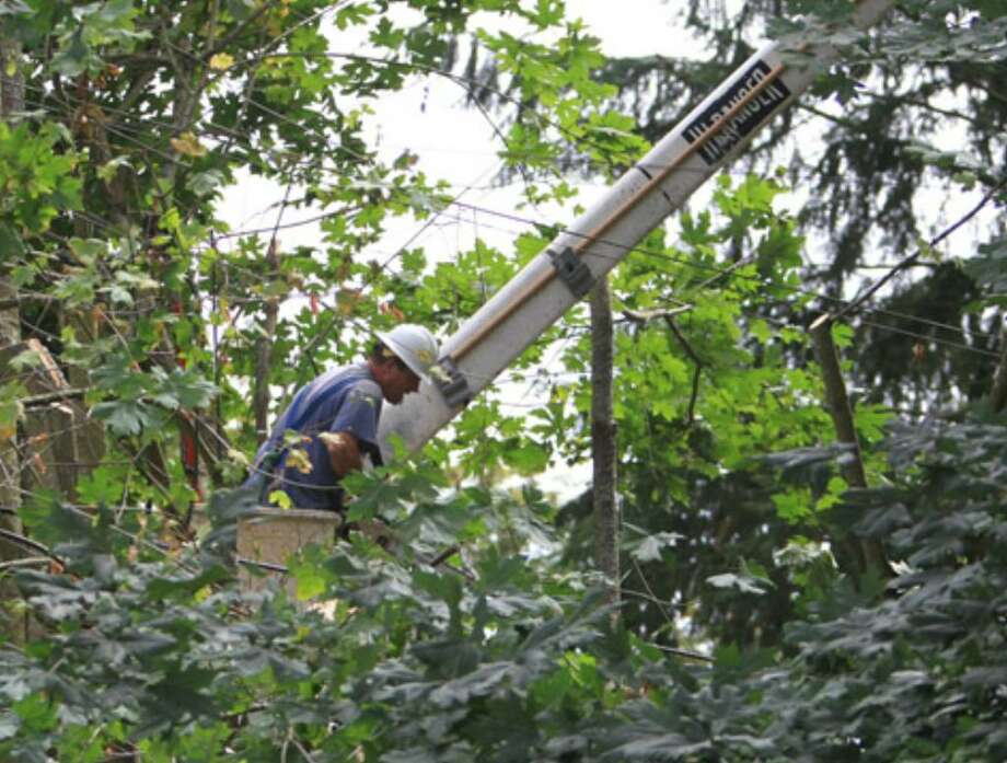 Seattle City Light contractors cut back trees to create clearance for power lines on the edge of Kiwanis Ravine on Thursday July 29, 2010 in Magnolia. The City of Seattle hopes to preserve the city's tree canopy and preserving the nearby colony of great blue heron are part of the plan. No heron were nesting in the trees cut by the workers. (Joshua Trujillo, Seattlepi.com)