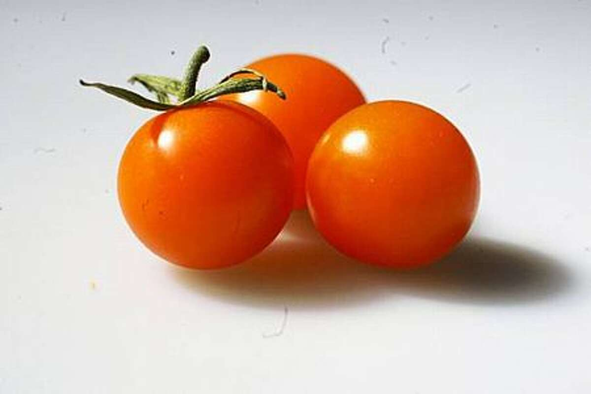 Native versions of tomatoes were small, like cherry tomatoes, and probably yellow rather than red.