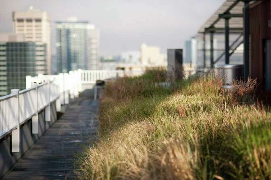 The M Street Apartments on 8th Ave. and Madison Street feature a green roof on the 21st floor. Pots filled with grass and flowers are spread out over the rooftop. Photo: Elliot Suhr/seattlepi.com