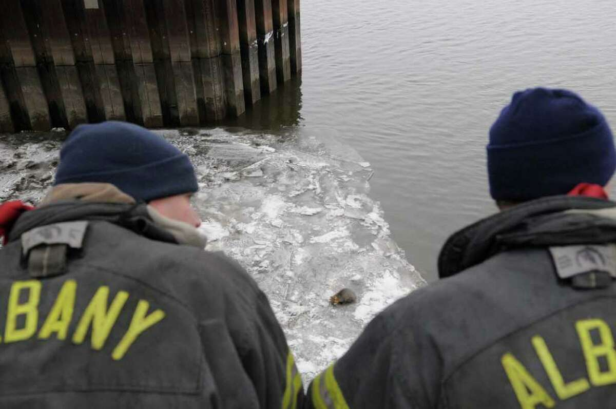 Albany firefighters work to rescue a gray fox trapped on thin ice under the Dunn Memorial Bridge in Albany, NY on Thursday, Dec. 23, 2010. (Paul Buckowski / Times Union)