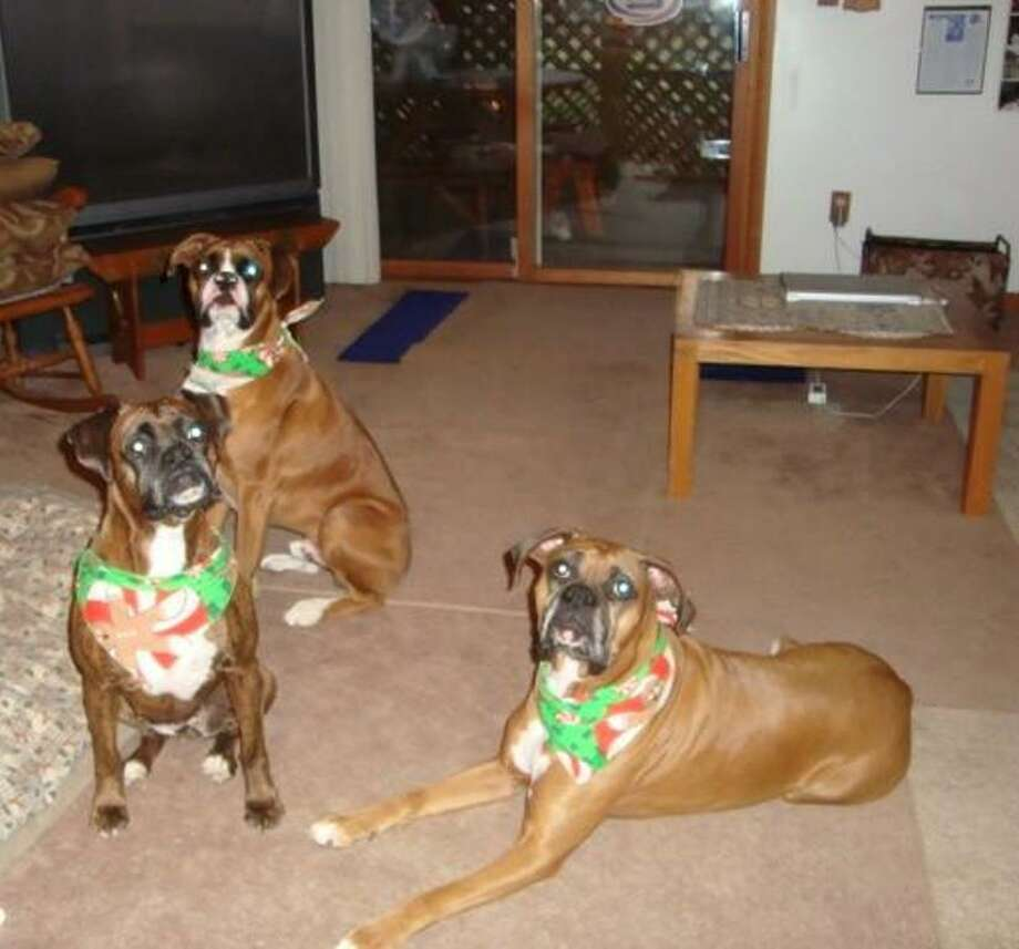A house full of boxers.