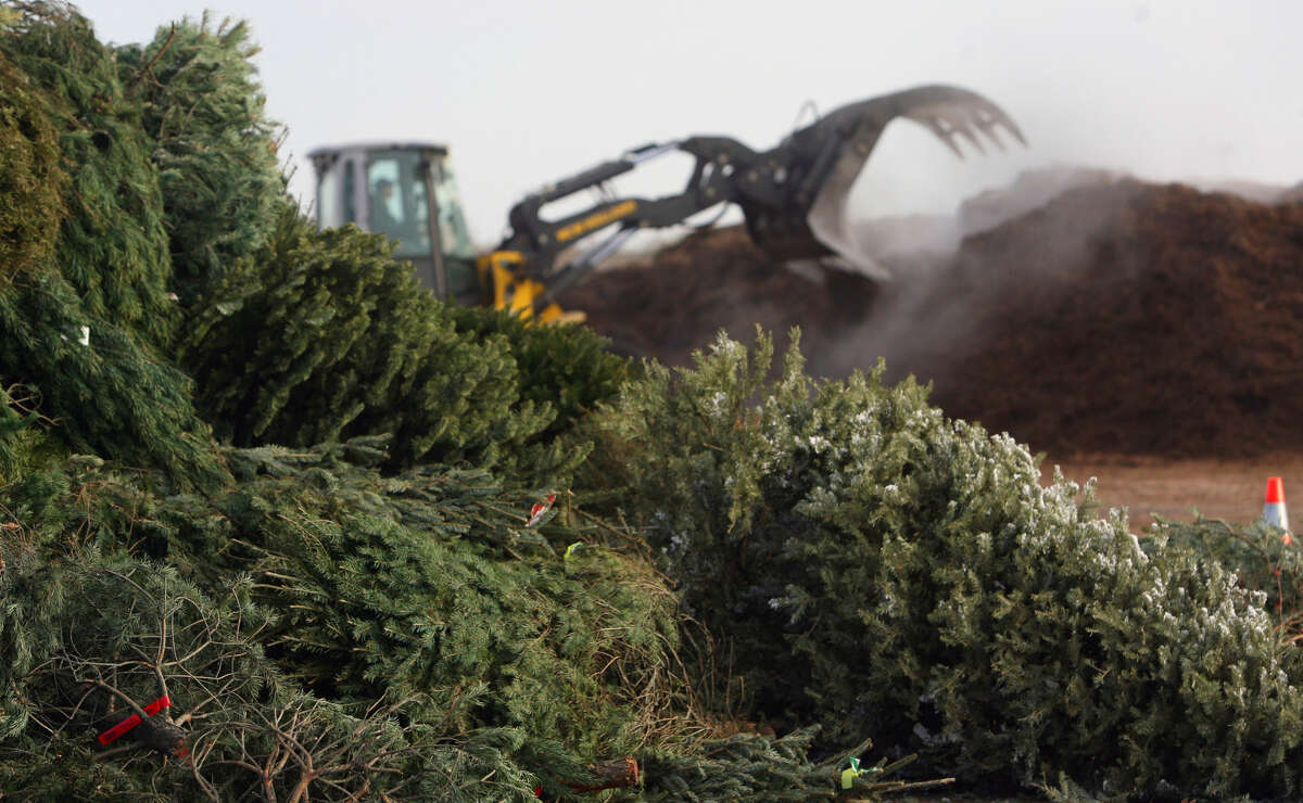City crews turn thousands of Christmas trees into nutrient-rich mulch each year. Though curbside pickup has ended, the recycling effort has not.