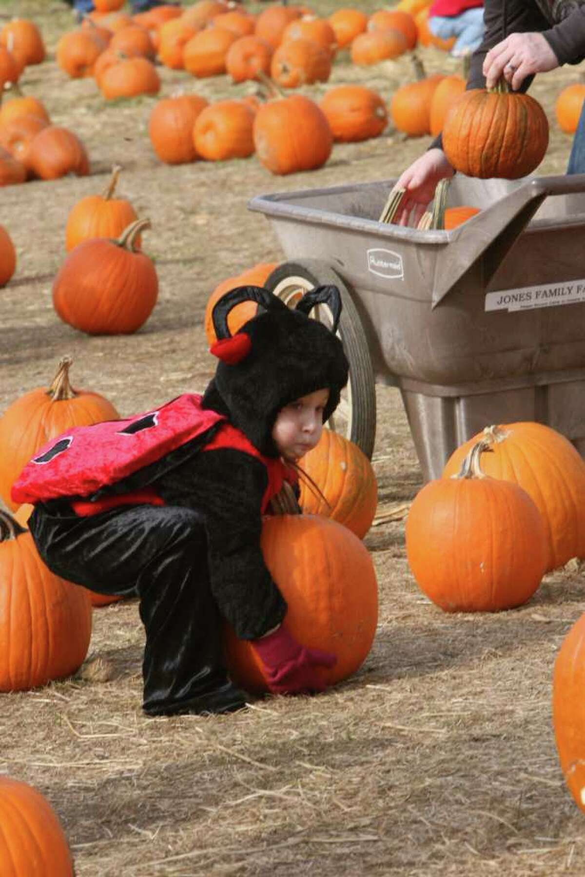 Jones Tree Farm holds a UNICEF Family Festival on Sunday, October 24, 2010.