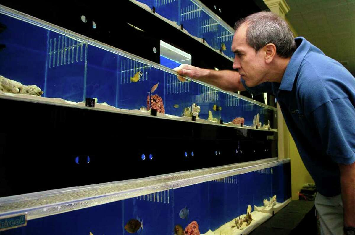 Randy Jahier, owner of new fish store called Life Aquatic in New Canaan, Conn., in his store on Thursday December 30, 2010