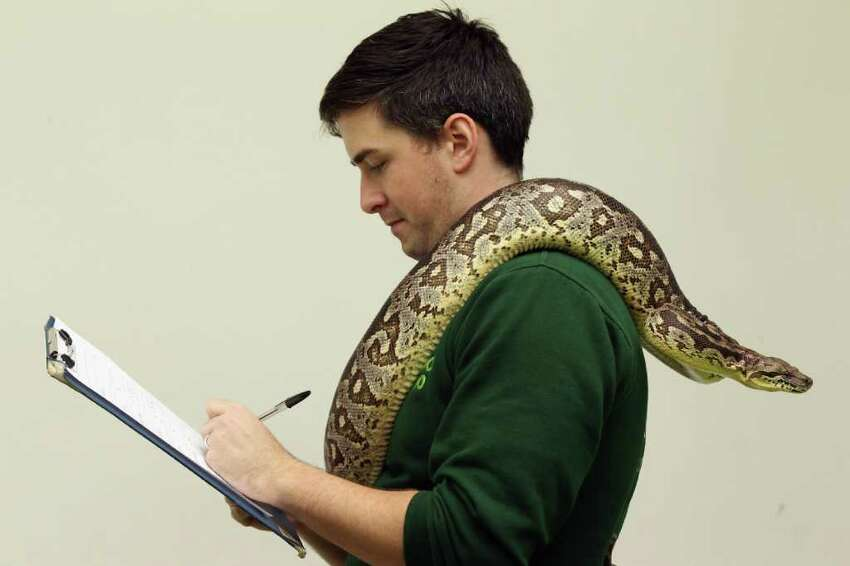LONDON, ENGLAND - JANUARY 04: Zoo keeper Grant Cother makes note of a Dumerils Boa as he conducts ZSL London Zoo's annual stocktake on January 4, 2011 in London, England. London Zoo is home to over 16,000 animals from over 700 different species including over 10,000 invertebrates, 4,700 fish and 100 reptiles. (Photo by Oli Scarff/Getty Images)