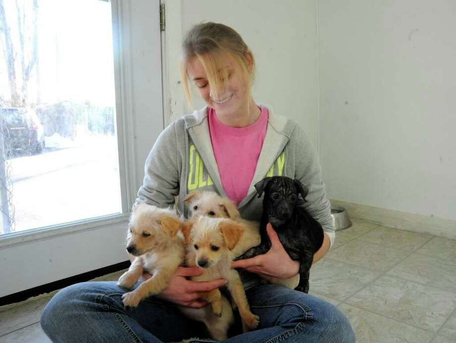 Courtney Farquhar, of Bankville, an Adopt-A-Dog staff member, holds some of the puppies that came from an hoarder in Bridgeport, now at Adopt-A-Dog, on Tuesday, Jan.4, 2011 Photo: Helen Neafsey / Greenwich Time