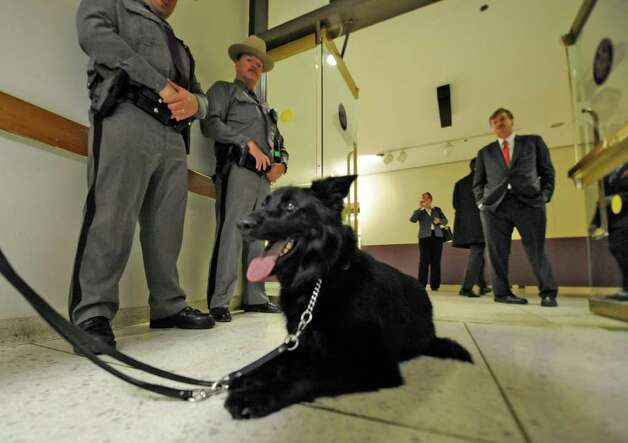 Trooper Jeff Dovigh's canine partner, Matti, takes a brief rest after conducting a search of the Convention Center in the Empire State Plaza in Albany before Gov. Andrew Cuomo makes his first State of the State speech January 5, 2011.  (Skip Dickstein / Times Union) Photo: SKIP DICKSTEIN / 2008