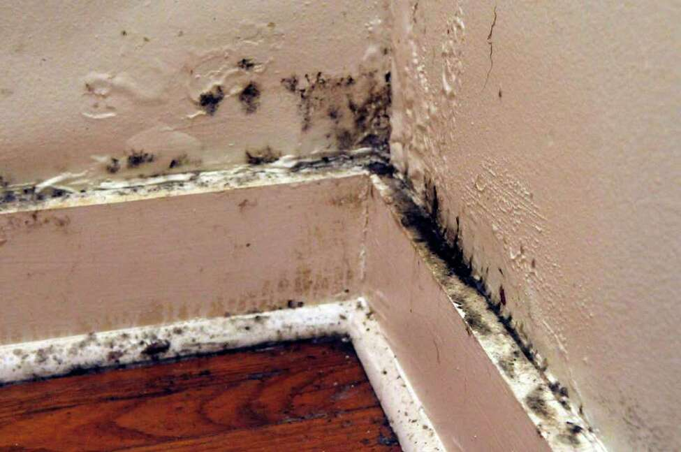 A photo of a corner of a room in the apartment where Rose Brundige lives in Watervliet on Thursday, Jan. 6, 2011, Brundige says all of this is mold and the apartment is mold-infested. (Paul Buckowski / Times Union)
