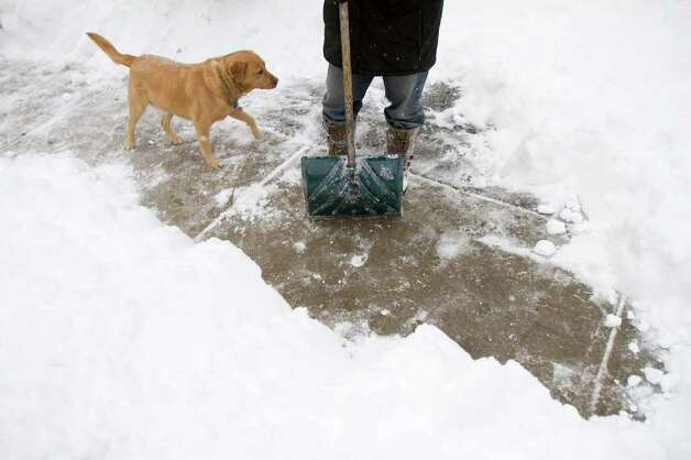 Harold Mims and his dog, Cotton, shovel snow on Green St. during a snow storm in Stamford, Conn. on Tuesday, Jan. 12, 2011. Photo: Contributed Photo / Stamford Advocate Contributed