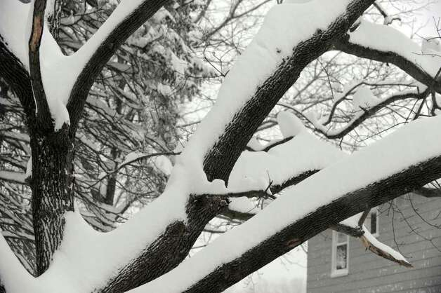 Snow rests on the trunk and branches a tree in Danbury early Wednesday morning, January 12, 2010. Photo: Carol Kaliff / The News-Times