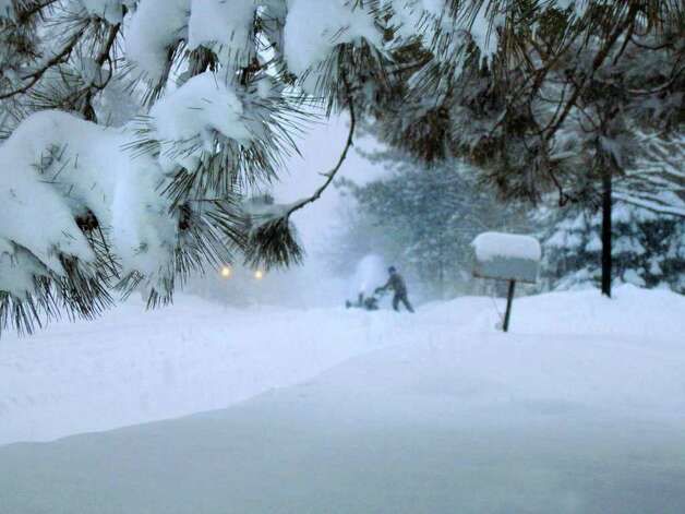 Snow clings to pine tree branches in North Greenbush as people dig out of the snow that fell Tuesday night and Wednesday, Jan. 12, 2011.  (Paul Buckowski / Times Union) Photo: Paul Buckowski / 10011727A