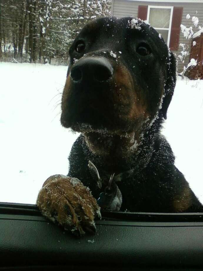 """hey, you going my way?"" (Dennis R Parker Jr / via Facebook) Upload your snow photos here."
