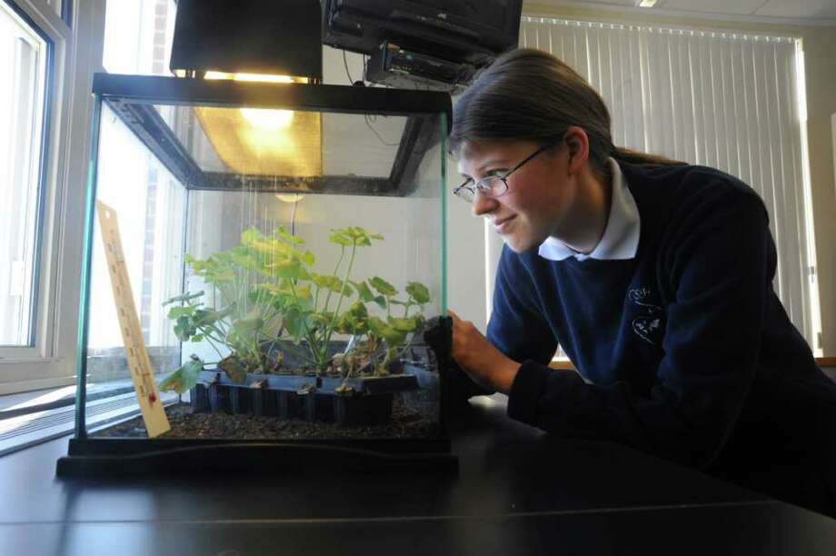 Mary Furth, a senior in the Upper School at Convent of the Sacred Heart, waiting for beetles to hatch in a terrarium at a school laboratory on Thursday, Jan. 13, 2011. She has won the prestigious 2010 Senior Youth Incentive Award from The Coleopterists Society for her original research on natural pesticides and their effect on crop-damaging beetles. Photo: Helen Neafsey / Greenwich Time