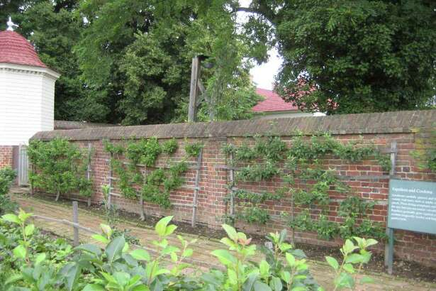 Space-saver: Espaliered fruit in the Lower Garden at Mount Vernon. Kathy Huber photo