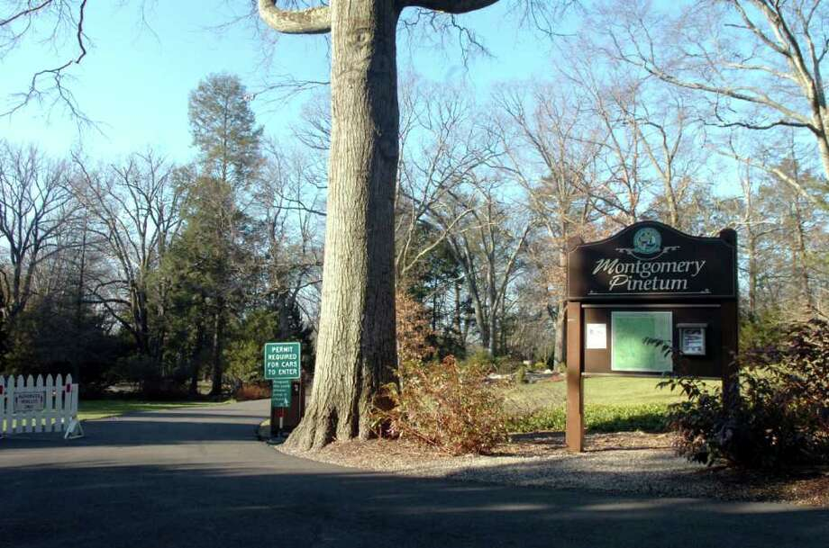 The town has hired a consultant to review its options if a cell tower should be placed in the Montgomery Pinetum, a nature preserve in Cos Cob. Photo: File Photo / Greenwich Time File Photo